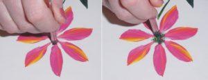 flowerstep9