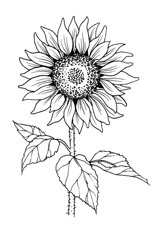 Sunflower Stamp-Tall - Colors For Earth, LLC